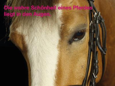 Pferde und Hunde nachdenkliche Pferdesprüche